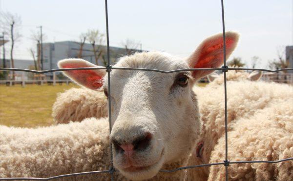 羊が丘_R
