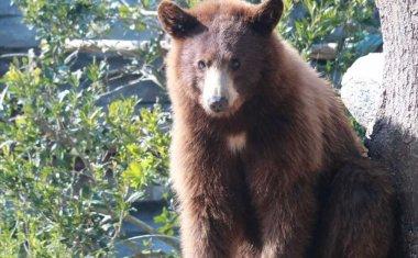 神戸どうぶつ王国の仲間 American Black Bear