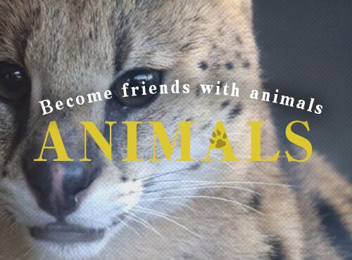animals0706